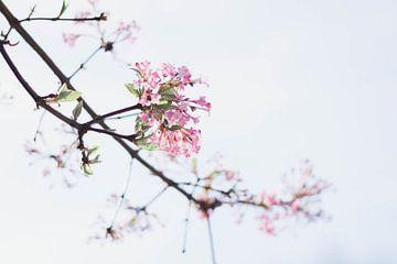 Blühende Blume von Marlous de Raad