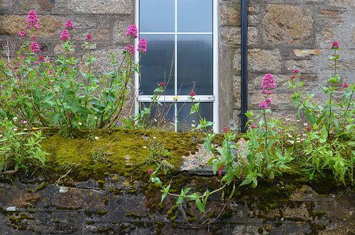 Muurtje in Mousehole, Cornwall