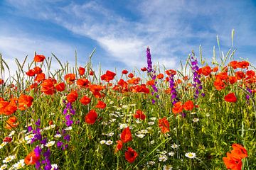 Sommerblumen Feld von Peter Stottmeister