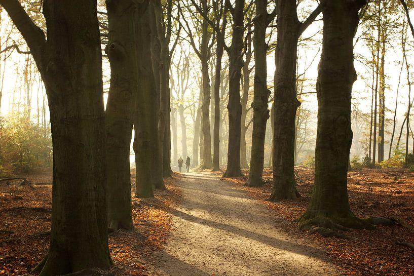 Golden autumn van Eddo Kloosterman