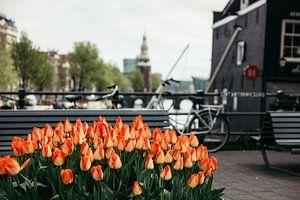 Tulpen bij Sint Antoniesluis