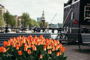 Tulpen bij Sint Antoniesluis van Joran Maaswinkel