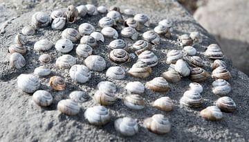 Schelpencirkel op rots van