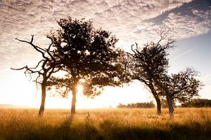 Savanna Sunrise sur Andrea Gulickx