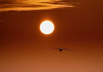 Into the Sun von Zeeland op Foto