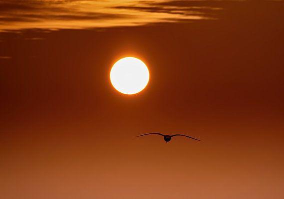 Into the Sun van Jonathan van den Broeke