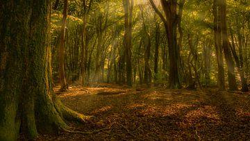 speulderbos met lichtstralen van Joey Van Hengel