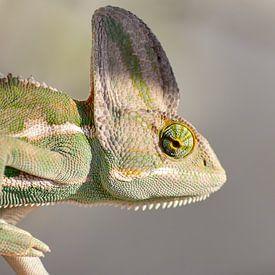 Portrait eines Chamäleons von Monodio Photography