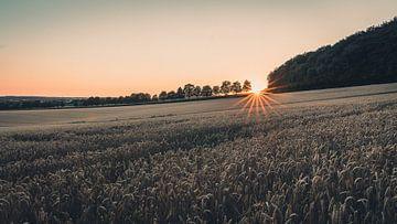 Sonnenuntergang über dem Feld von Steffen Peters