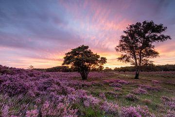 Zonsondergang op de paarse heidevelden! van Peter Haastrecht, van
