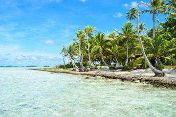 Plage de palmiers tropicaux sur iPics Photography
