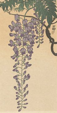 Bloeiende wisteria van Ohara Koson