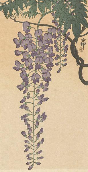 Bloeiende wisteria van Ohara Koson van Gave Meesters