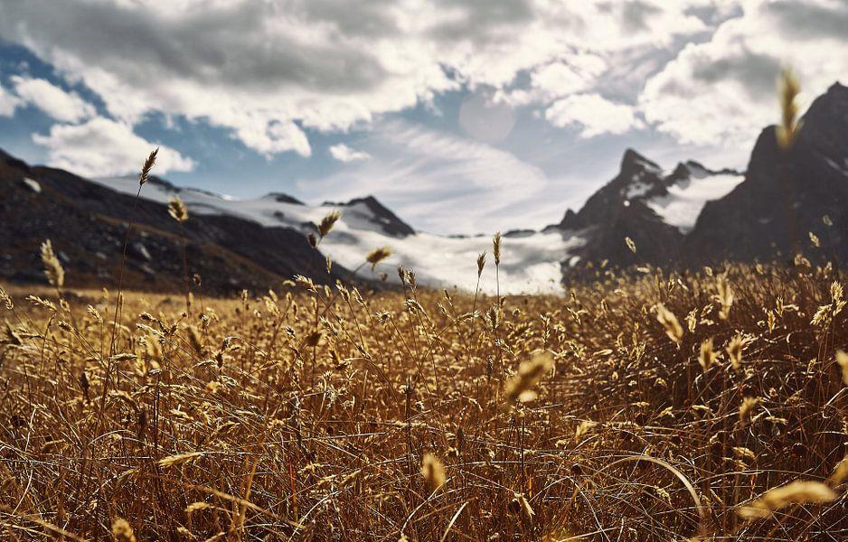 A Golden Dream van Lumi Toma