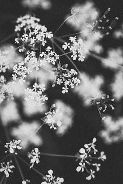 Schwarz-weiße Wildblumen im Regenbogenviertel von Almere | Naturfotografie in den Niederlanden von Evelien Lodewijks
