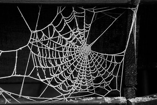 Spinnenweb in de winterkou