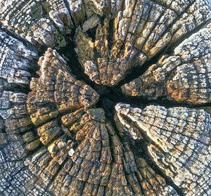 verweerd hout