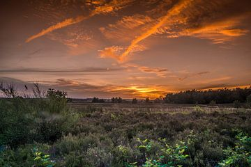De veluwe bij een oranje zonsondergang RawBird Photo's Wouter Putter van Rawbird Photo's Wouter Putter