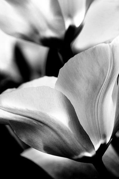 Tulpen in zwart-wit van Anouschka Hendriks