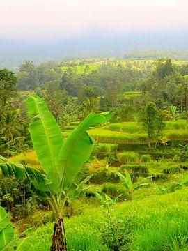 Bananenstauden und Reisfelder auf Bali von Thomas Zacharias