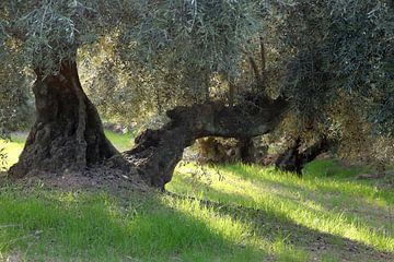 Avondzon in de olijfgaard van Jan Katuin
