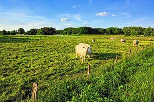 Rural Scenery in Lower Saxony