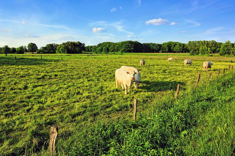 Rural Scenery in Lower Saxony van Gisela Scheffbuch