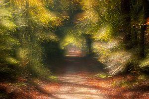 Herbst im Wald von wilma ten Bhömer