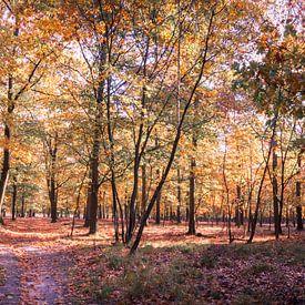 Herfstkleuren van Marcel Pietersen