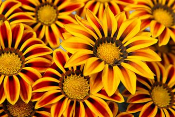 Bos Gerberas geel en rood van Tessa Louwerens