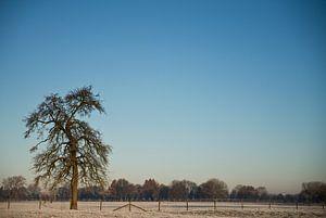 winter perenboom