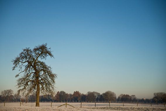 winter perenboom van Mariska Hofman