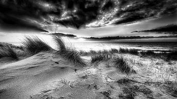 Niederländische Küste mit den Dünen und der Nordsee von eric van der eijk
