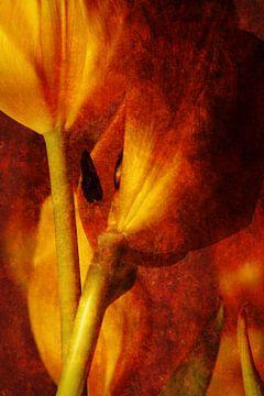 Tulpen van Markus Wegner