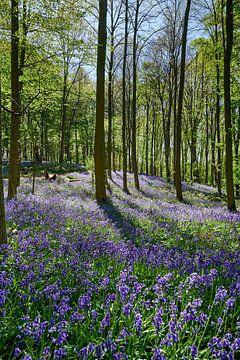 bloeiende bluebells in het bos van Jürgen Ritterbach
