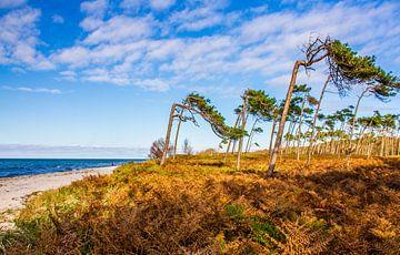 Windflüchter von Holger Felix