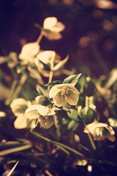 Blume von Marieke Bakker