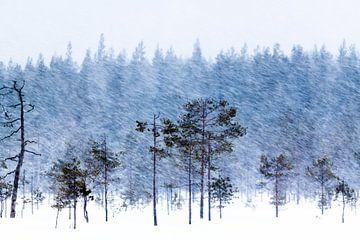 schneebedeckte Bäume von Ed Klungers