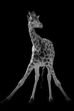 Giraffe yoga in zwart-wit van Marjolein van Middelkoop