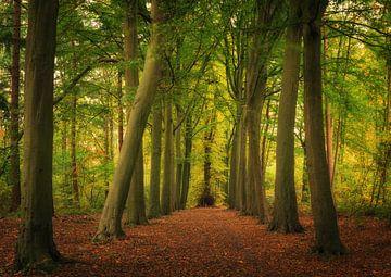Auf dem Weg in den Herbst von Wim van D