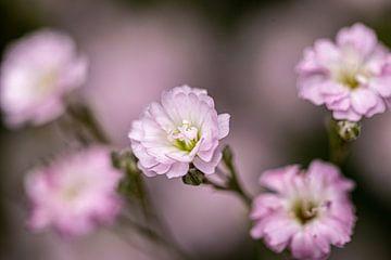 Zijdezachte bloemen van Francisco Dorsman