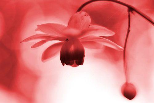 Lantaarntje met spinnetje vintage rood van Sascha van Dam