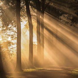 Spectaculaire zonnestralen schijnen over een bospad in Amelisweerd von Arthur Puls Photography