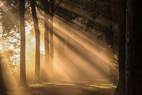 Spectaculaire zonnestralen schijnen over een bospad in Amelisweerd
