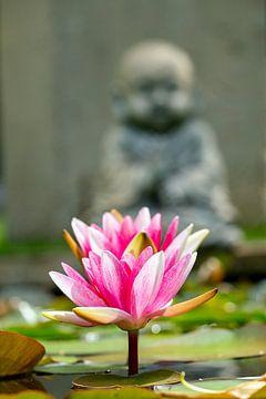 Rosa Seerose mit Buddha im Hintergrund von Humphry Jacobs