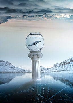 Bevroren dromen van Amadeo Truzzu