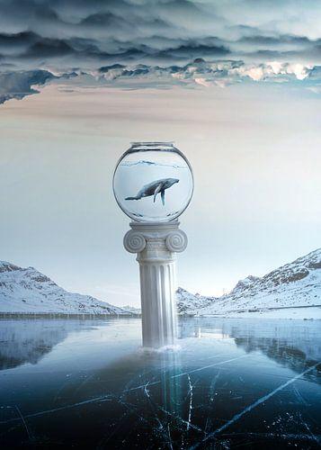 Frozen dreams sur