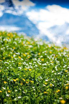 Alpenweide von Wouter Sikkema