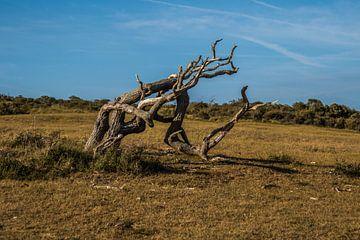 Drehungen und Wendungen der Natur von a schotanus