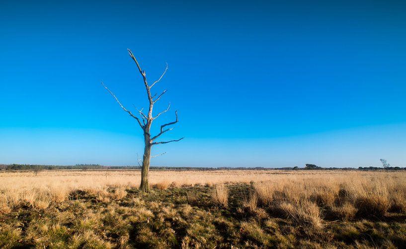 Groote Heide 7 van Deshamer